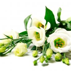 valkoinen kimppu kukkia